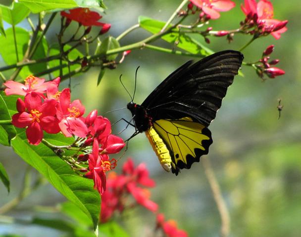 Парк бабочек в Таман Купу-купу