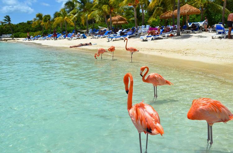 Розовые фламинго