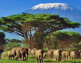 Главные достопримечательности Кении