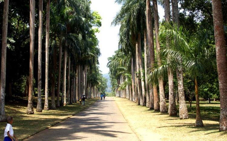 Пальмовая аллея «Пальмира»