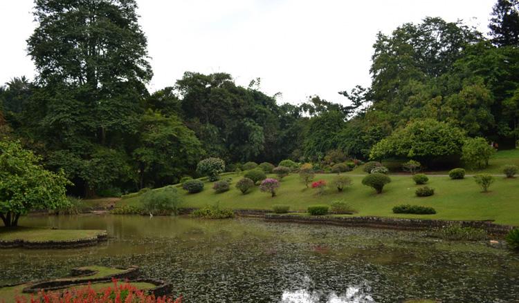 Пруд в королевском ботаническом саду