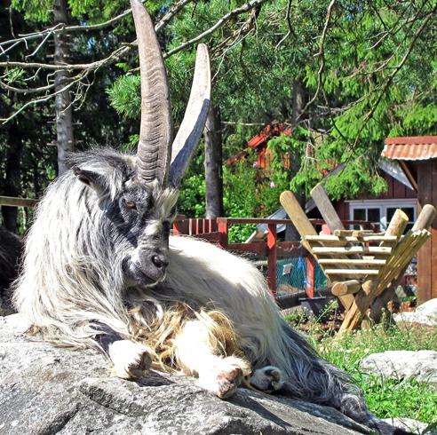 Зоопарк и парк развлечений Kristiansand Dyrepark