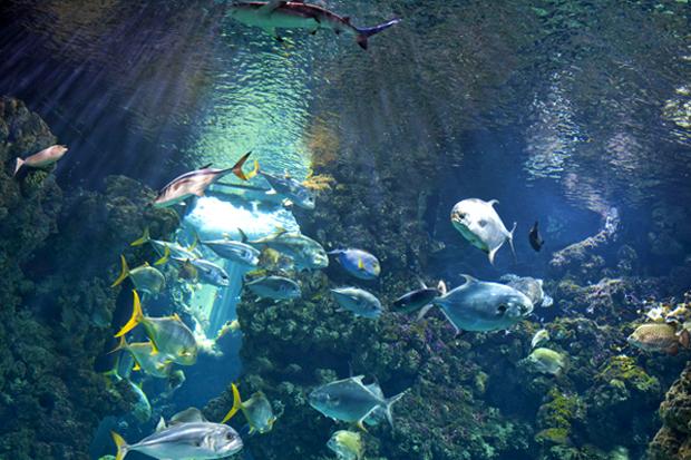 Тропический аквариум Джибути