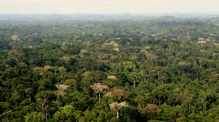 Национальный парк Таи