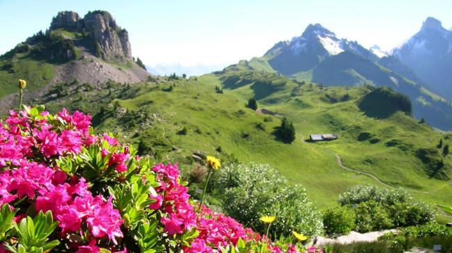 Панорамы «Альпийского ботанического сада