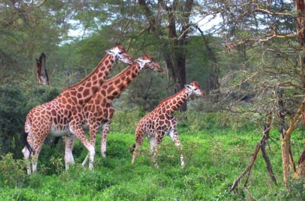 Национальный парк Комоэ