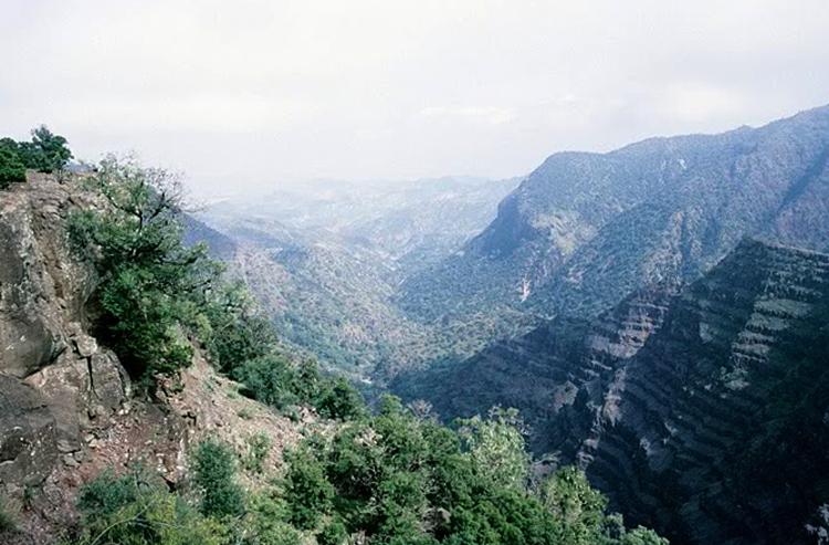 Национальный парк Дей Форест