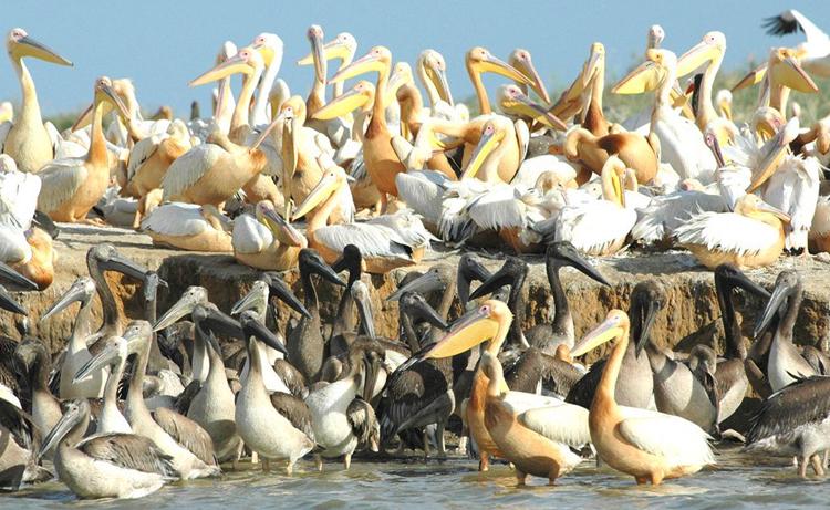 Орнитологический резерват Джудж