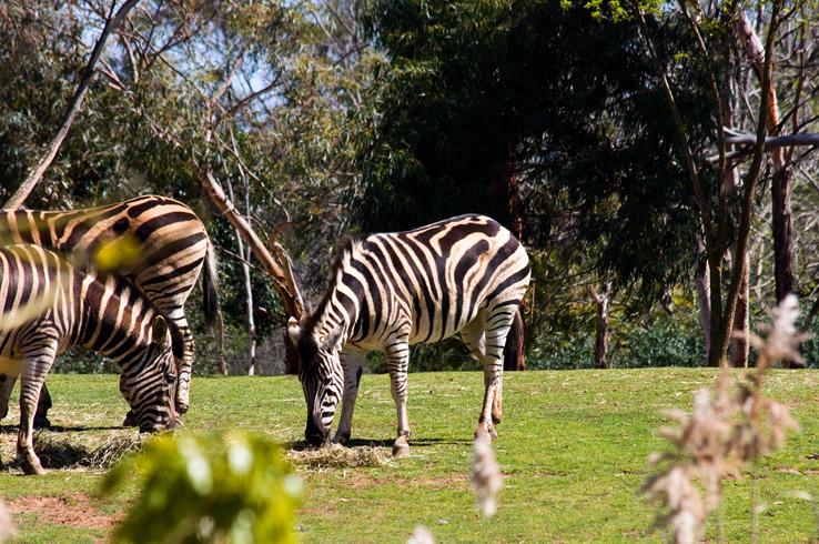 Открытый зоопарк