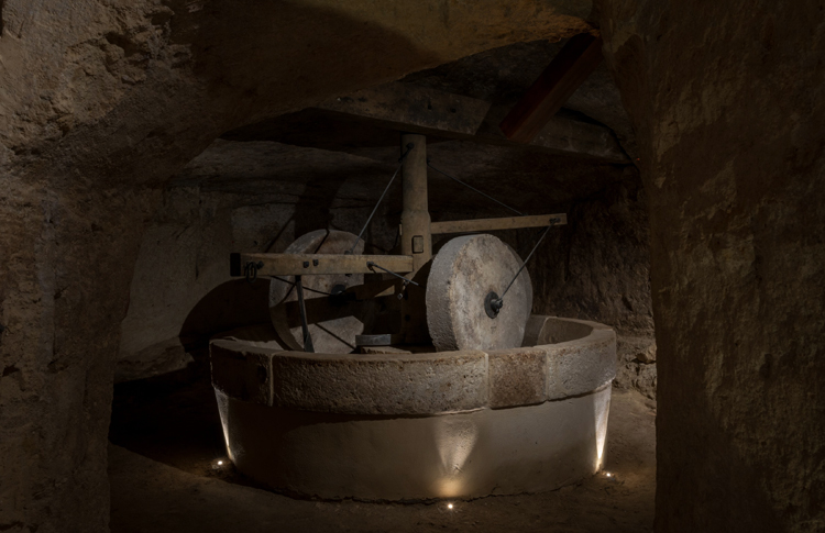 MOOM Matera Olive Oil Museum