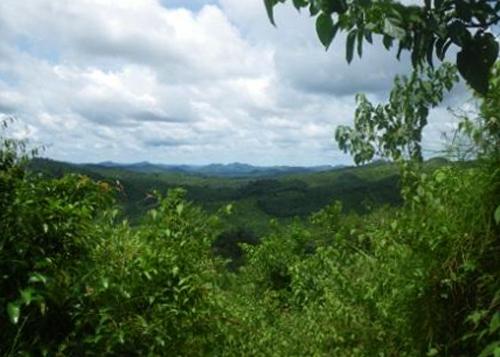 Лесной заповедник «Кангари Хиллз»