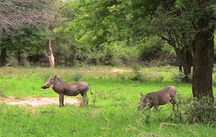 Национальный парк Ленгве