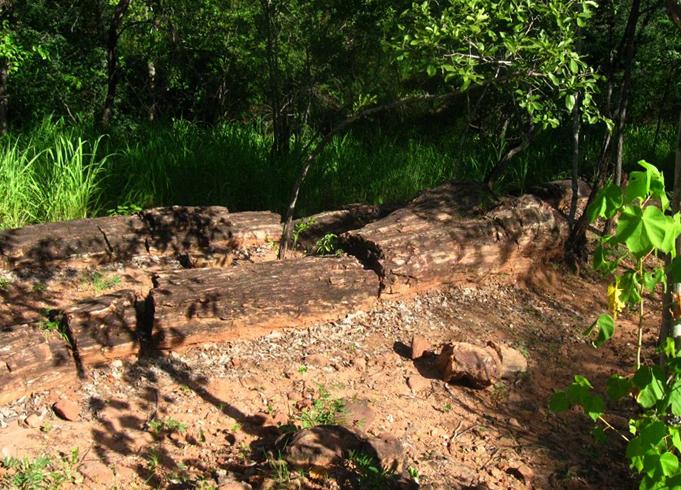 Лес окаменелостей Чурунду