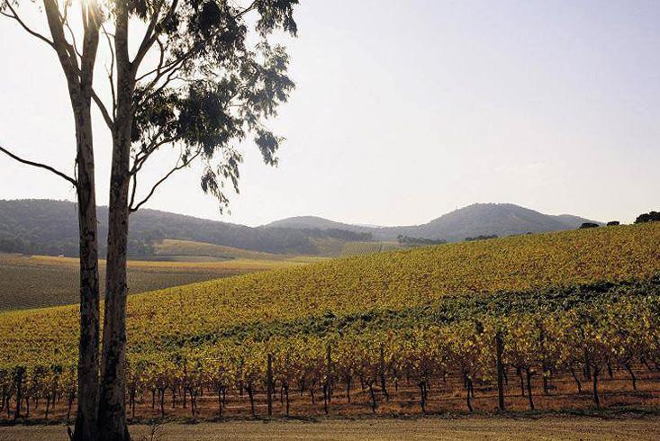 Район виноделия