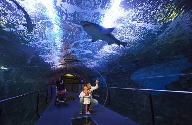 Аквариум Океанографический музей