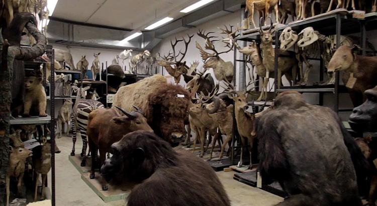 Государственный музей естествознания Штутгарта