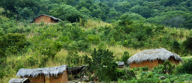 Лесной заповедник Нтчиси