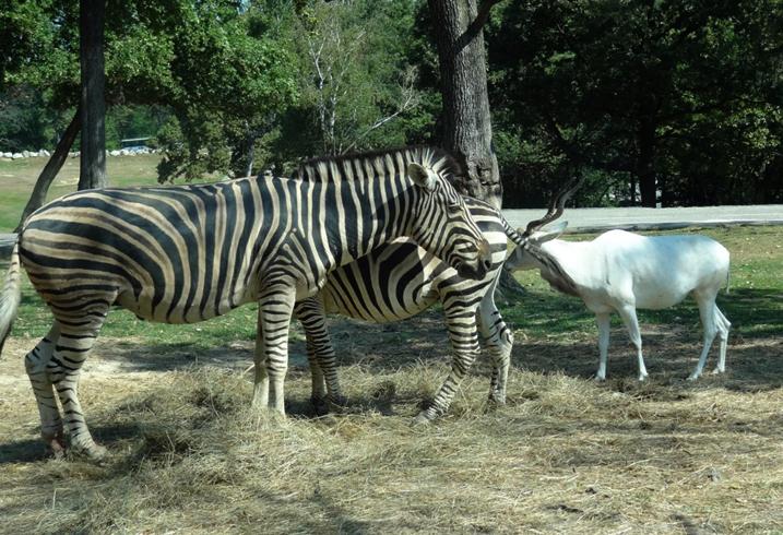 Сафари – парк «Помбия»