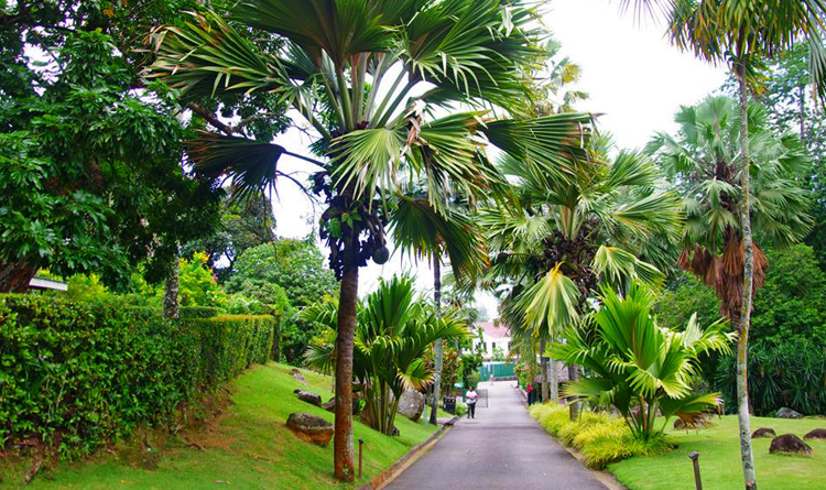 Ботанический сад «Мон Флери»
