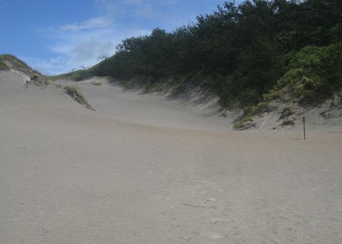 Песчаные дюны Сигатока