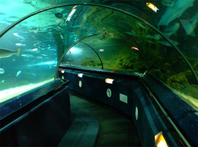 Музей-аквариум «Подводный мир Келли Тарлтона»