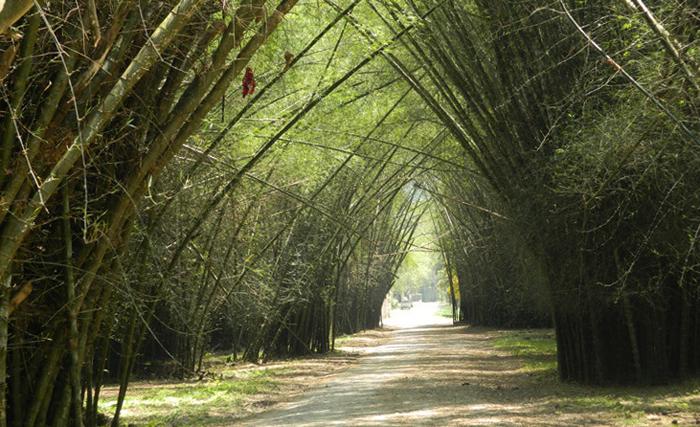 Ботанический сад Лансетилья