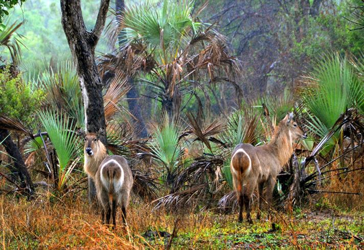Национальный парк Горонгоса