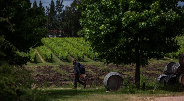 Винодельня семьи Хуанико
