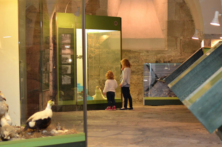 Музей Сааремаа
