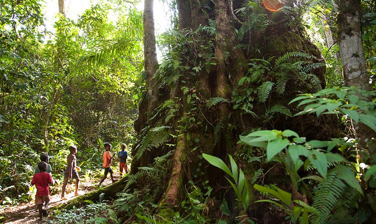 Национальный парк Сапо