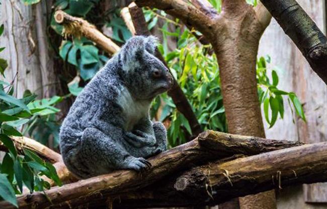 Зоопарк Дуйсбурга