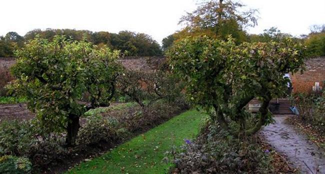 Сад замка Миромениль