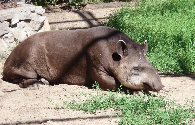 В Новосибирском зоопарке