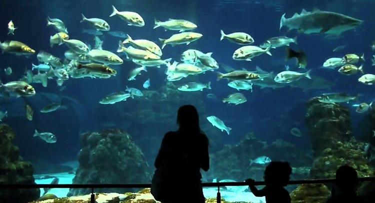 Городской аквариум