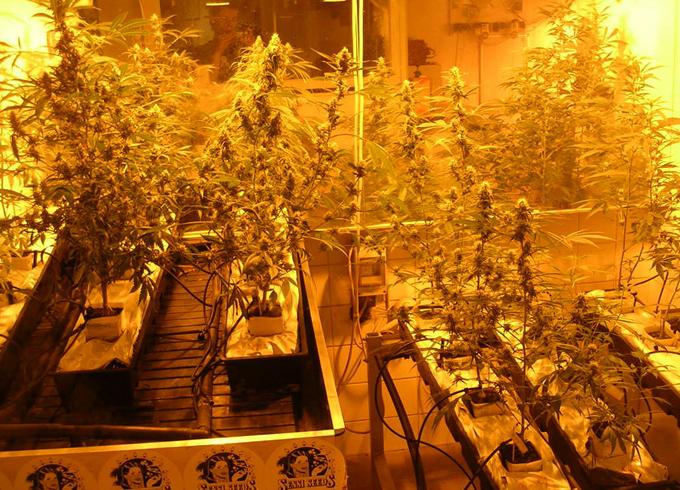 Музей марихуаны и гашиша