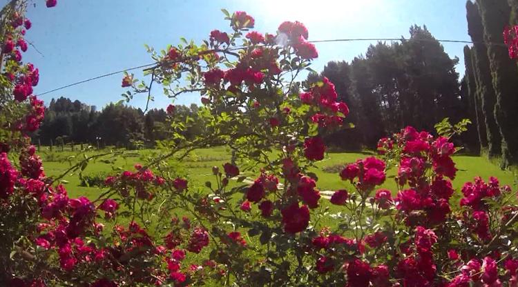 В долине роз