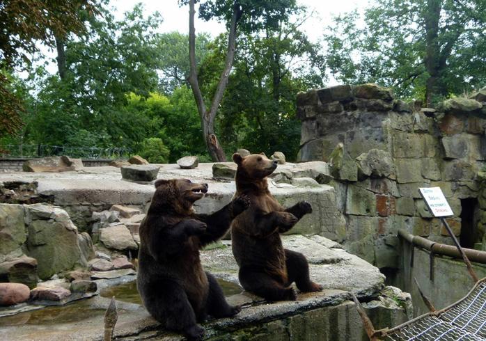 Исторический зоопарк Калининграда
