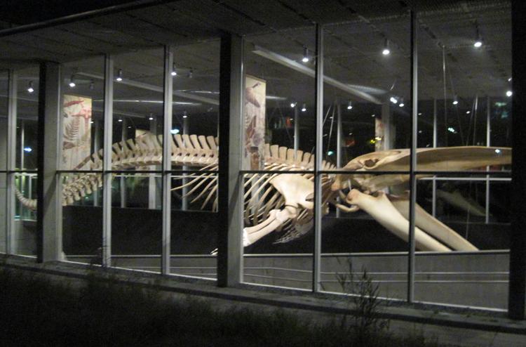 Музей биоразнообразия Бьюти