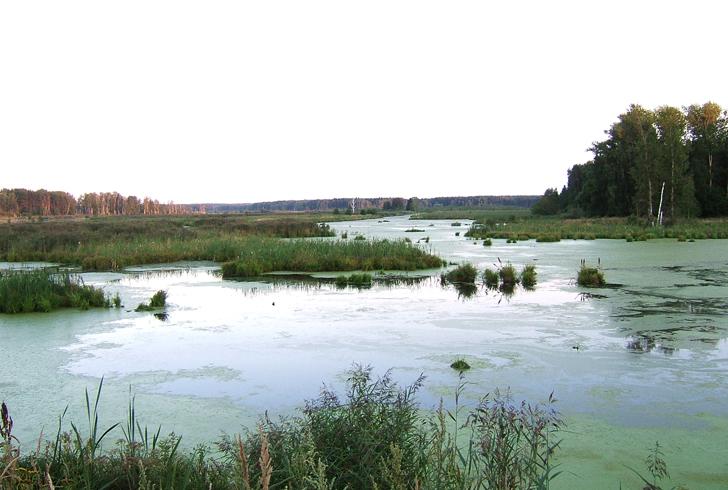 Национальный парк Лосиный остров