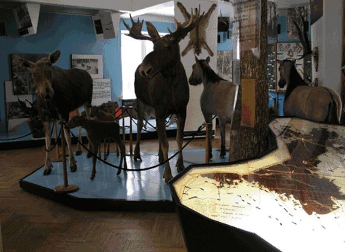 Внутри музея природы