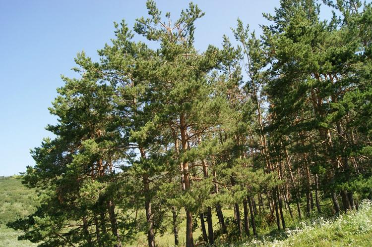 Государственный лесной природный заказник Семей орманы