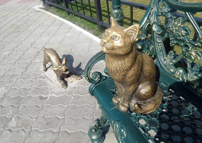 «Невозмутимый кот»