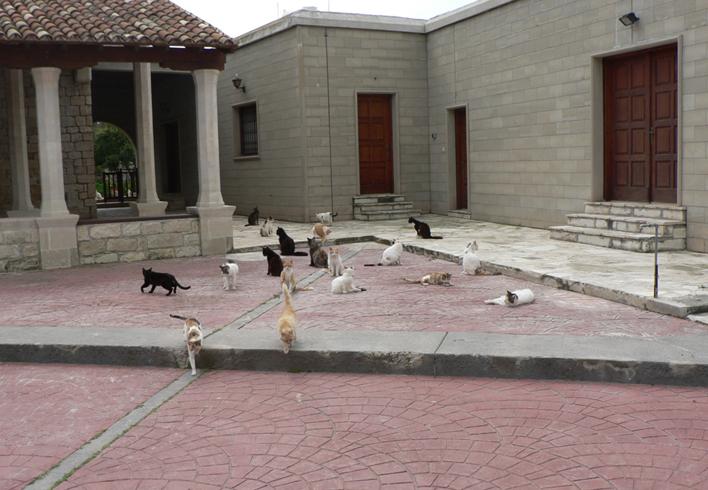 «Кошачий» монастырь Святого Николая