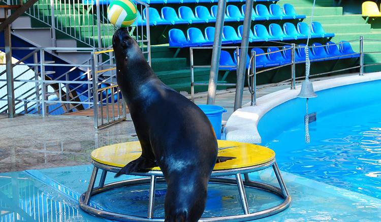 Дельфинарий «Аквамир»