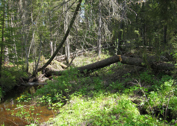 Заповедник «Кологривский лес»