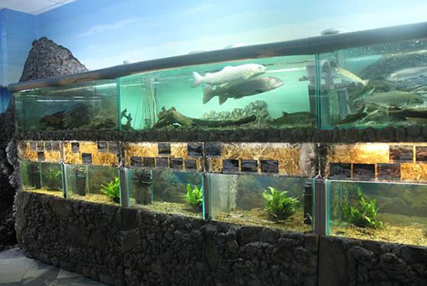Внутри музея рыбы