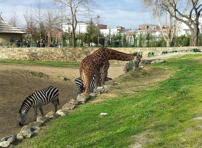 Зоопарк в Бурсе