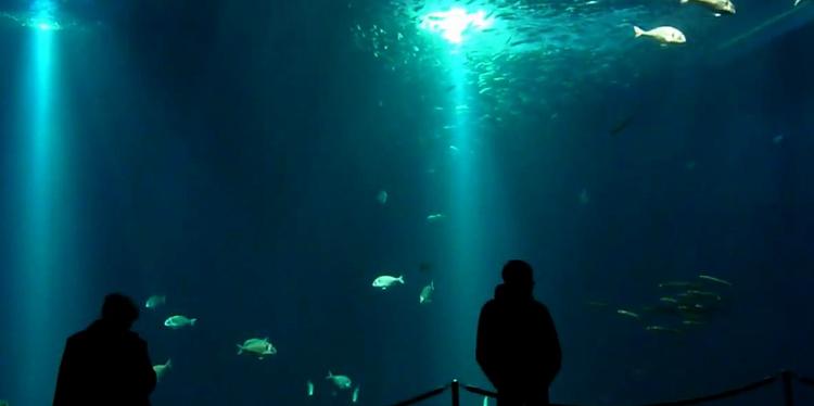 внутри океанариума
