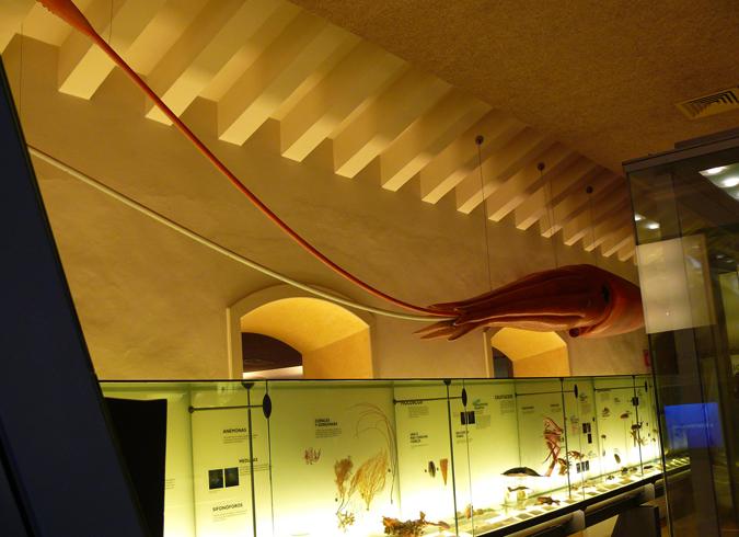 Внутри музея природы и человека
