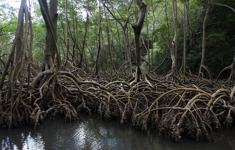 Дождевые леса
